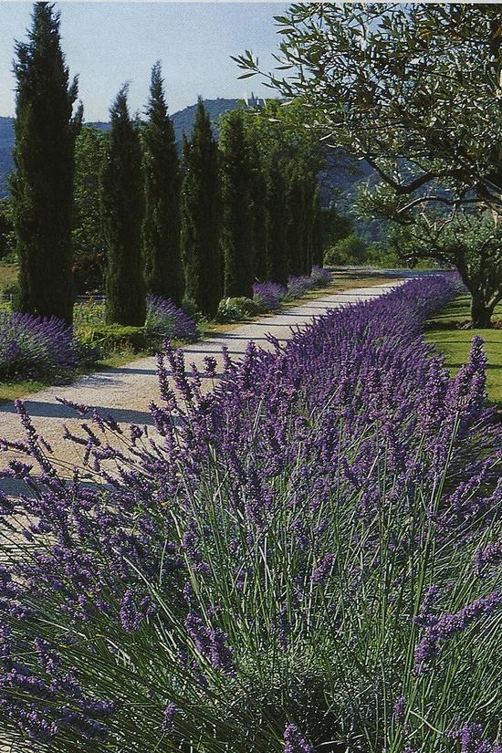 Lavender alley